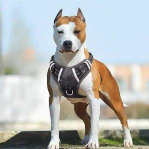 Babygirl Big Dog Harness