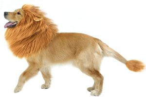 CPPSLEE Halloween Lion Mane