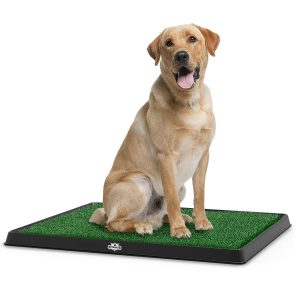 Pet Maker Best Grass For Dog