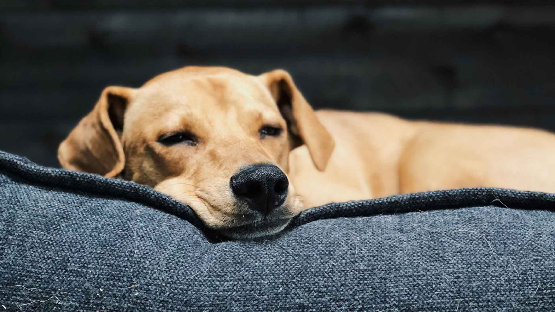 Best Dog Beds Of 2021: Reviews & Buying Guide