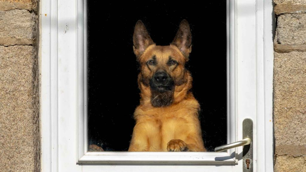 best dog doors