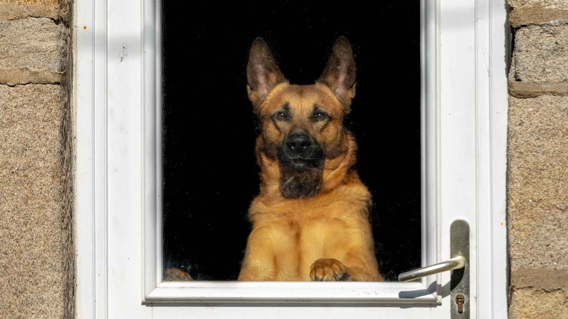 Best Dog Doors of 2021: Complete Buyers' Guide And Review