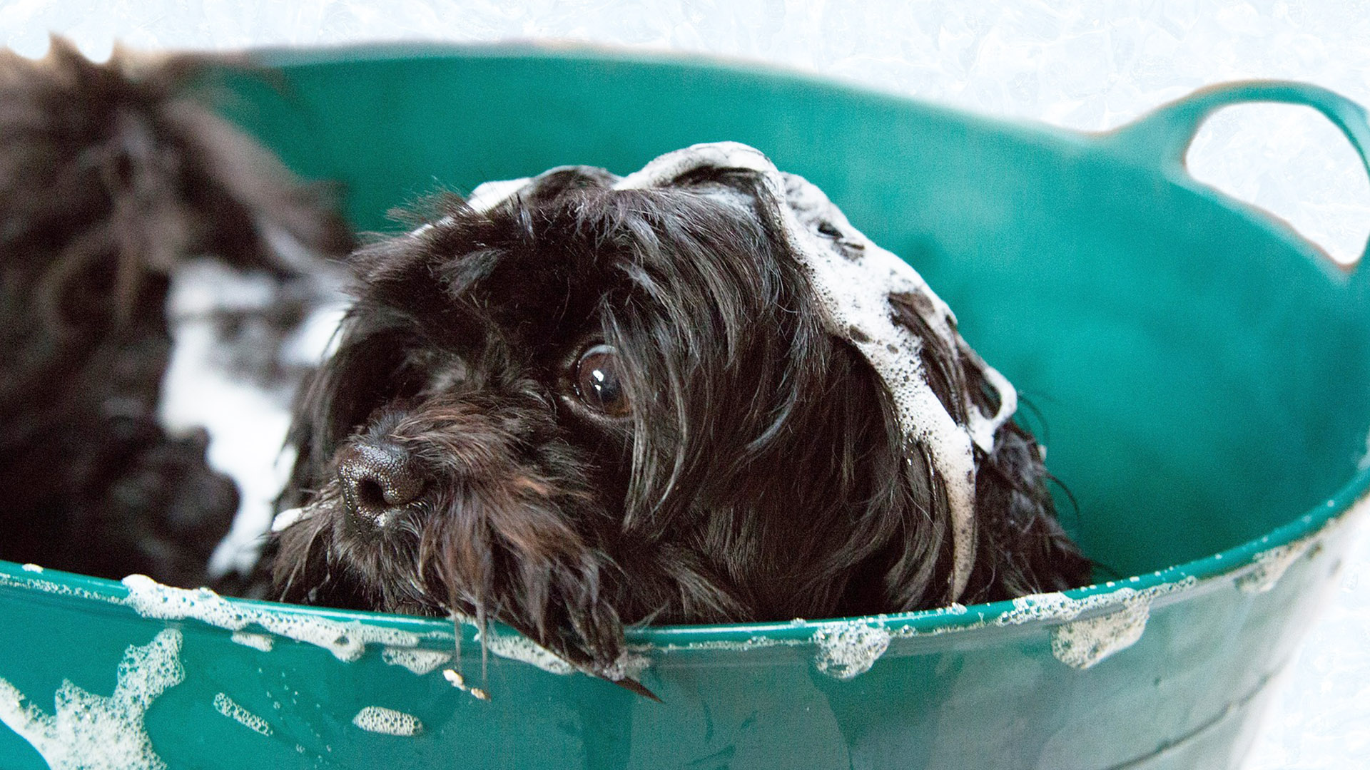 best dog shampoo