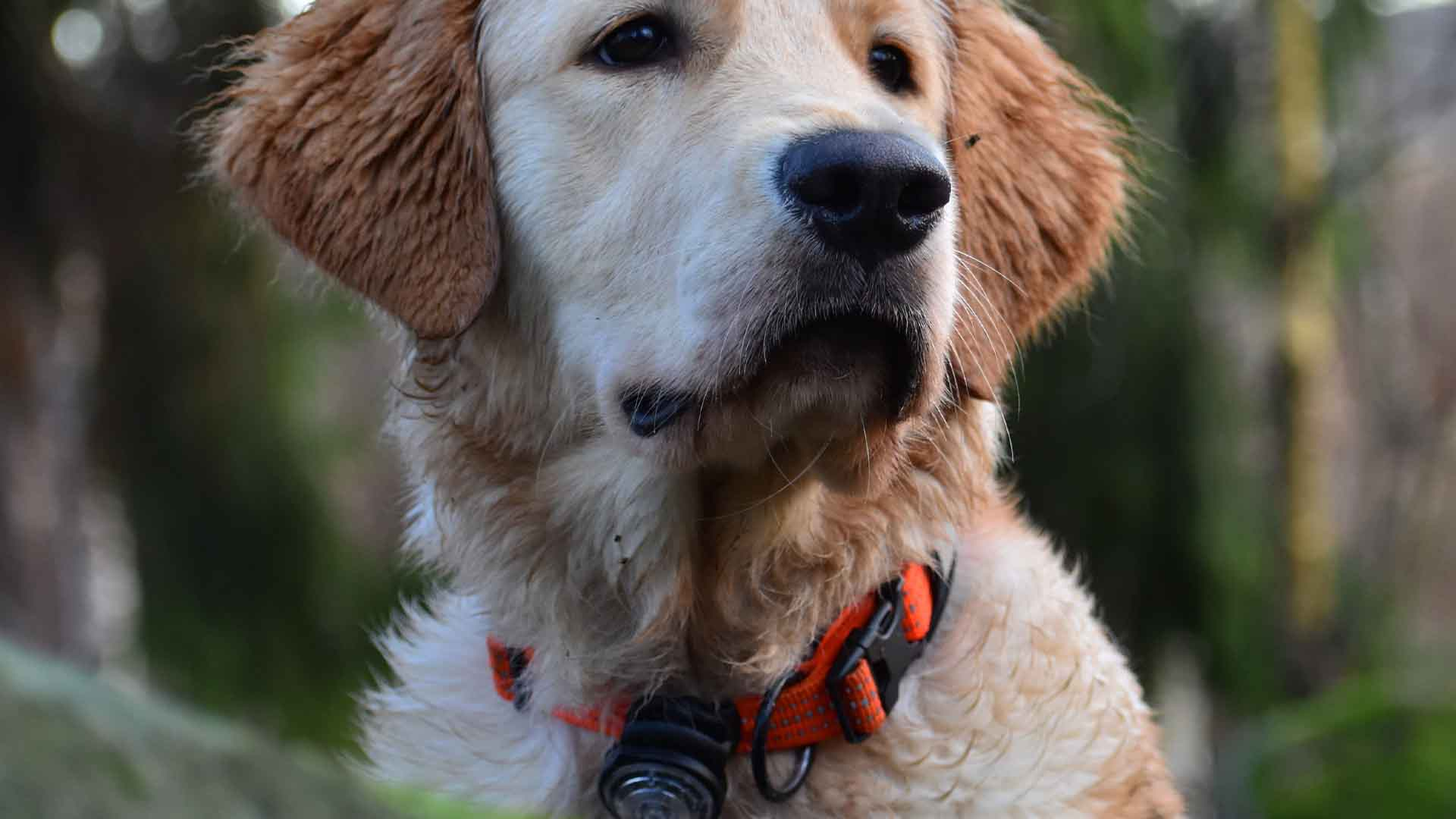Best Dog Training Collars 2021: Reviews & Buyer's Guide