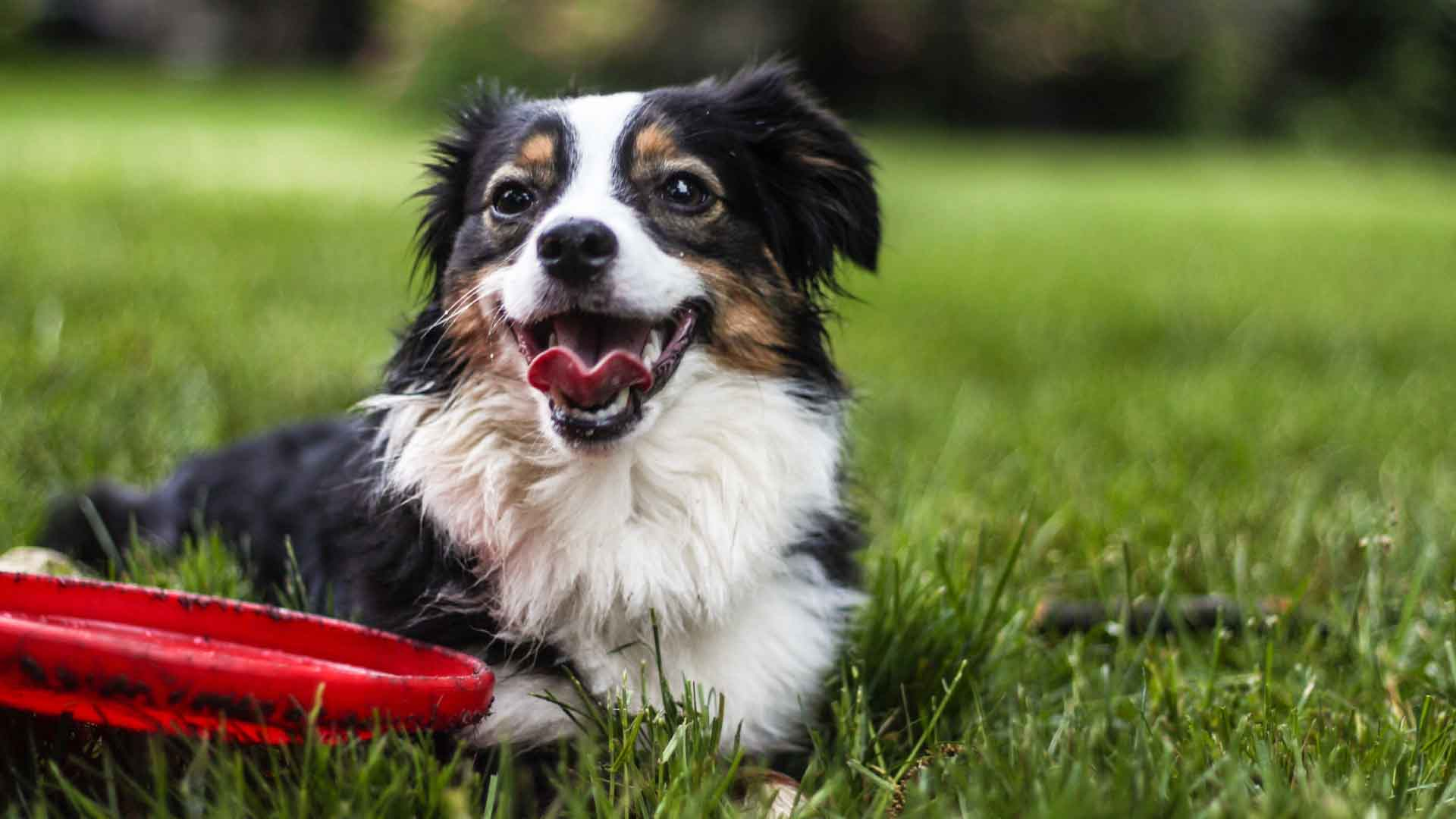 Best Grass For Dogs Of 2021: Reviews & Buying Guide
