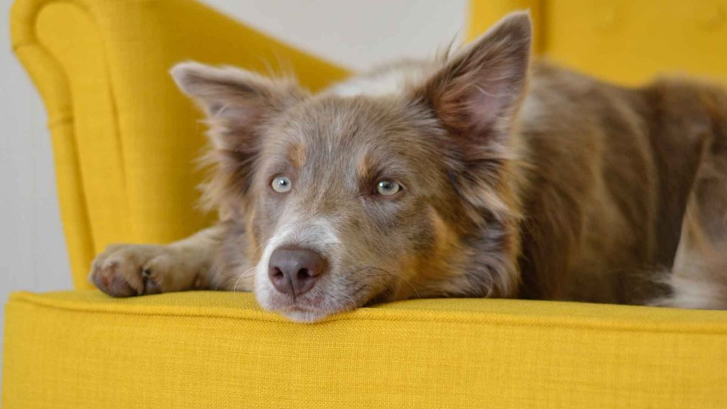 best couches for dogs