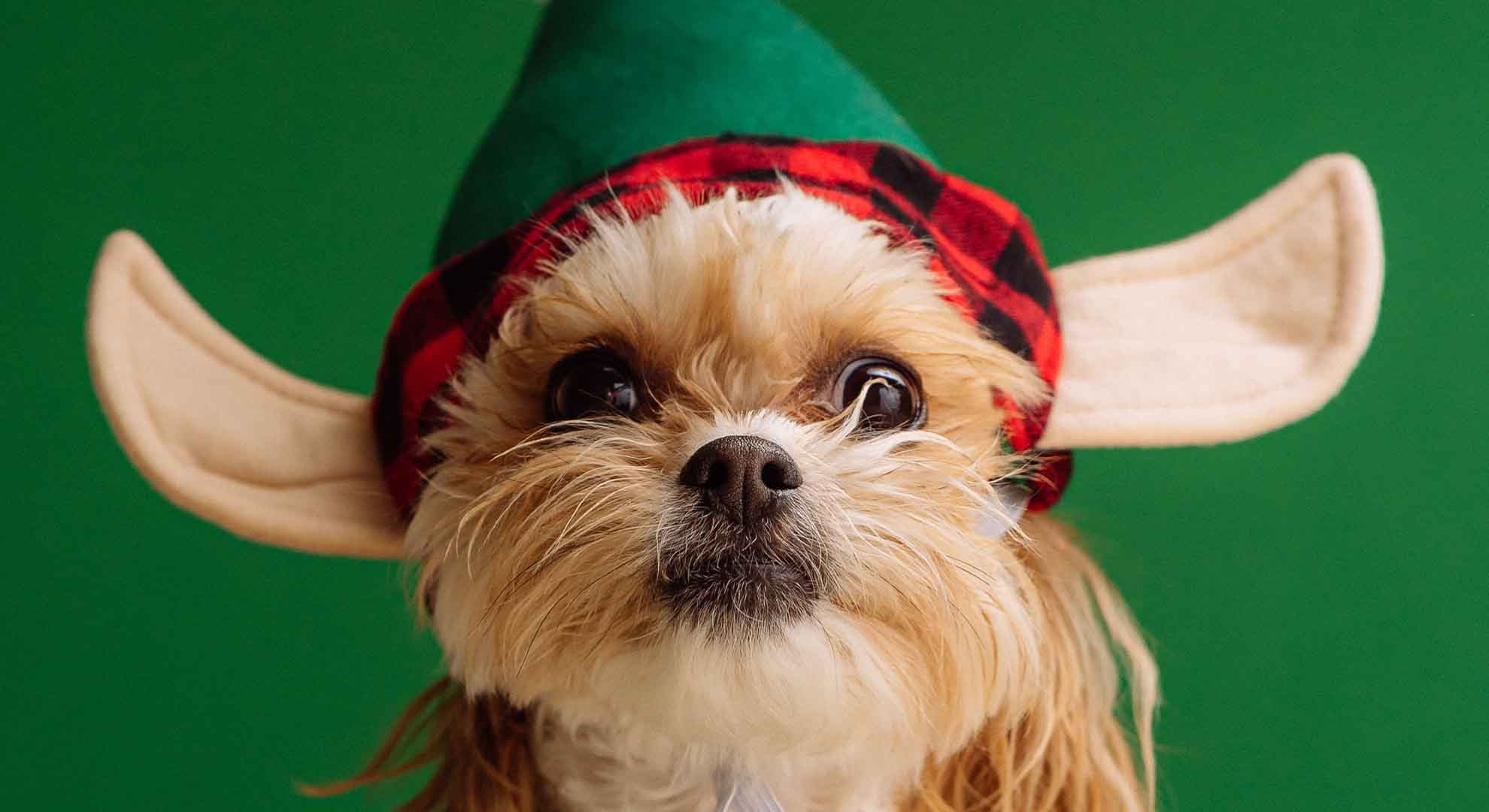 Best Dog Costumes Of 2021: Reviews & Buyer's Guide
