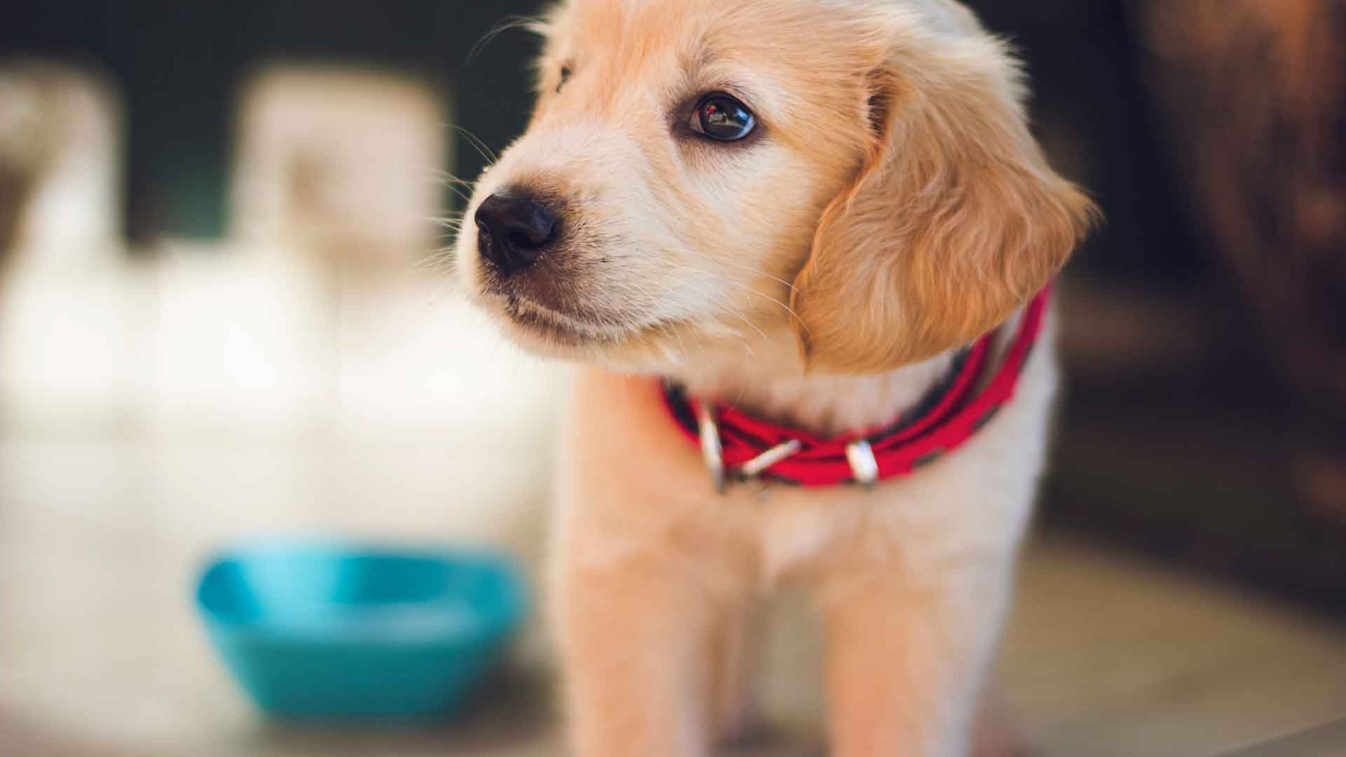 Best Dog Foods For Puppies 2021: Reviews & Buyer's Guide