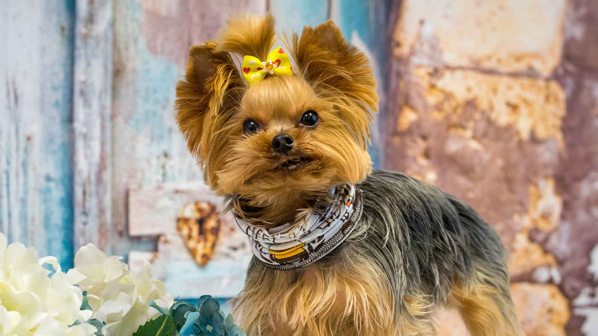 Best Dog Foods For Small Dogs 2021: Reviews & Buyer's Guide