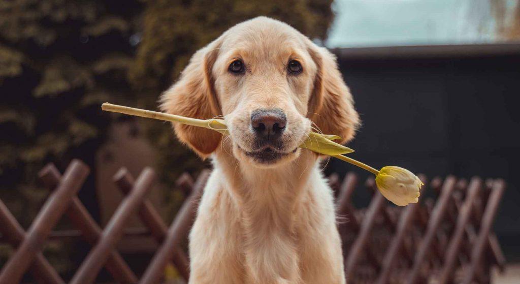best dog treats