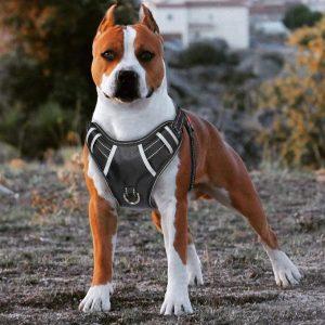 Babyltrl Best No Pull Dog Harness