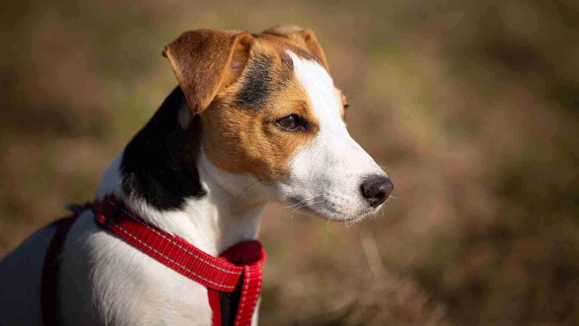 Best No Pull Dog Harnesses Of 2021: Reviews & Buyer's Guide