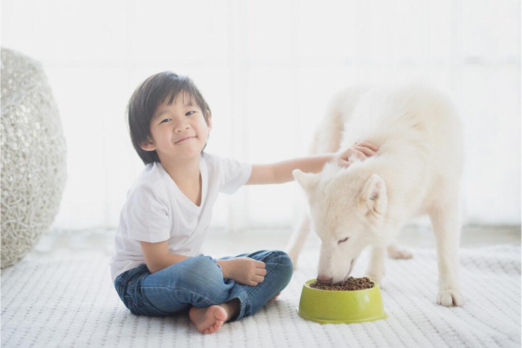 child feeds white husky dog