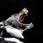 profile of dog barking
