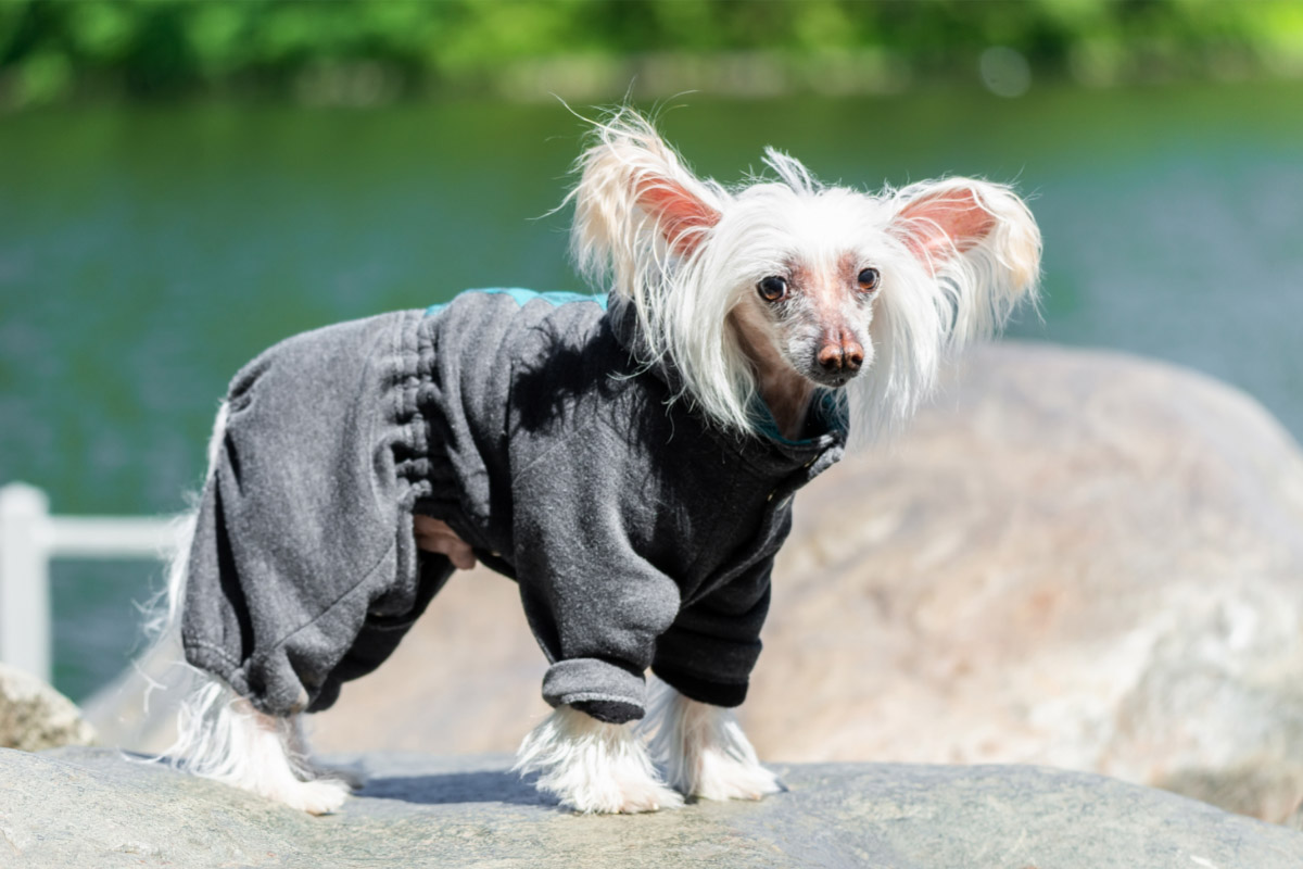 23 Weird Dog Breeds You Might Not Know